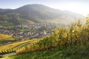 Der Badische Weinradweg – Sinzheim und das Baden-Badener Rebland