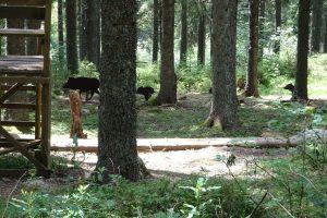 Wanderung im Staatspark Fürstenlager an der Bergstraße im Odenwald