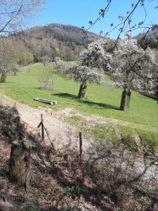 Auf dem Baden-Badener Panoramaweg